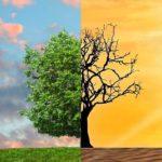 LANXESS światowym liderem w dziedzinie ochrony klimatu