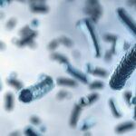 Polacy szukają bakterii zjadających tworzywa sztuczne