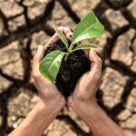BASF Polska w programie Climate Leadership